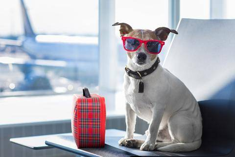 Pet Travelling and Passports